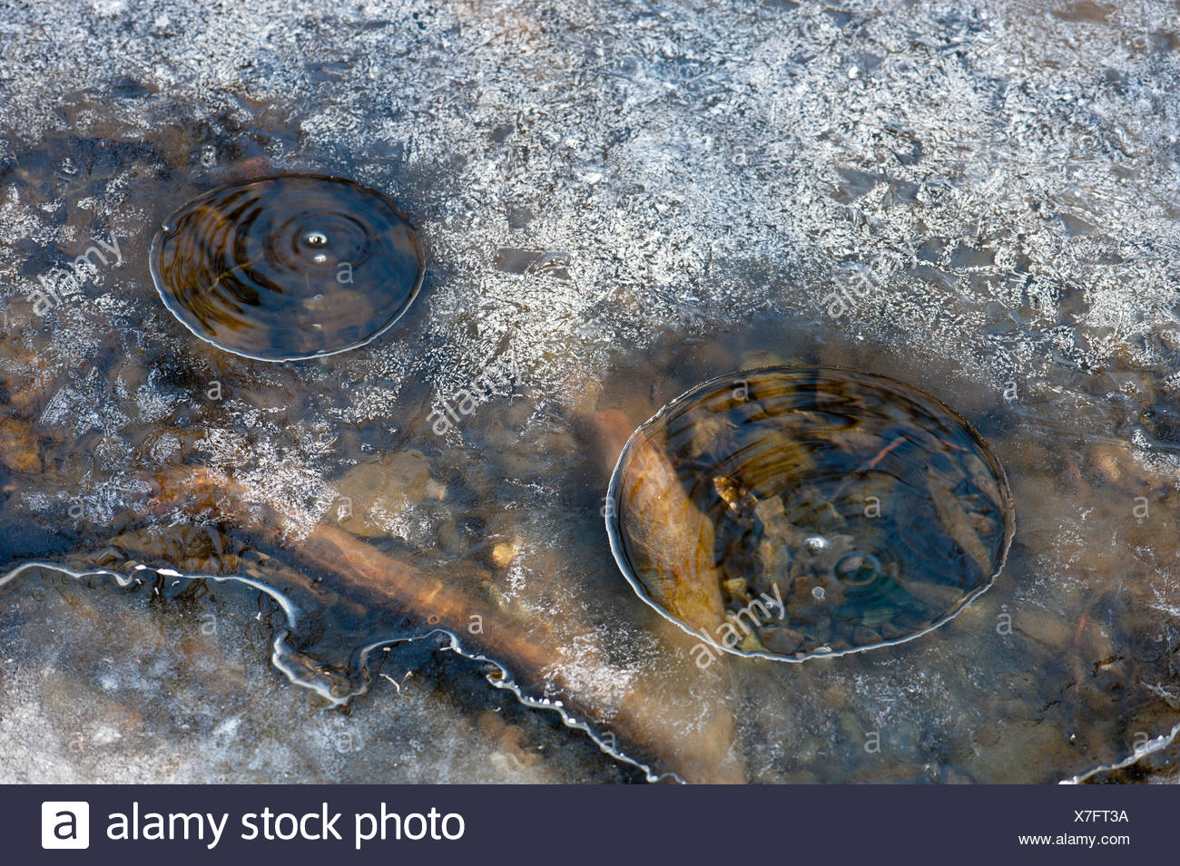 Bubbles, carbon dioxide escaping, mofette or mofettes, Laacher See, Laach Lake, Ahrweiler district, Eifel region - Stock Image