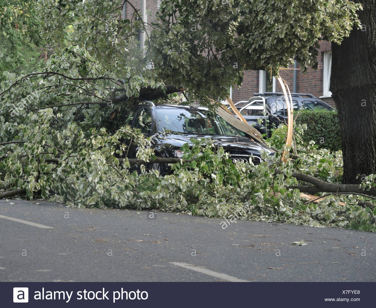tree fallen on a parked car, damages by storm front Ela at 2014-06-09, Germany, North Rhine-Westphalia, Ruhr Area, Bochum - Stock Image