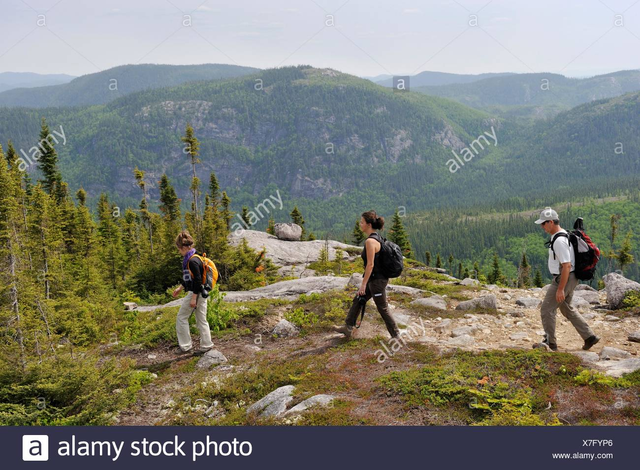 trekker on Pioui path, Grands-Jardins National Park, Province of Quebec, Canada, North America - Stock Image