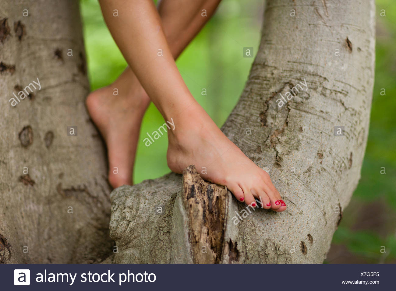 Bare legs and feet of young woman standing in tree - Stock Image