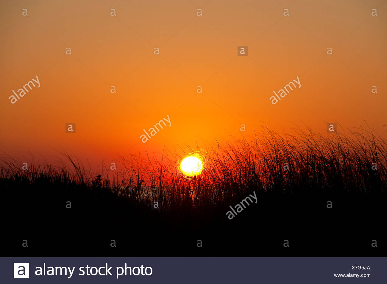 Coastal sunrise, Cape Cod, MA, USA - Stock Image