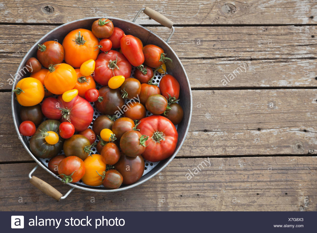 Freshly picked Tomatoes in colander - Stock Image