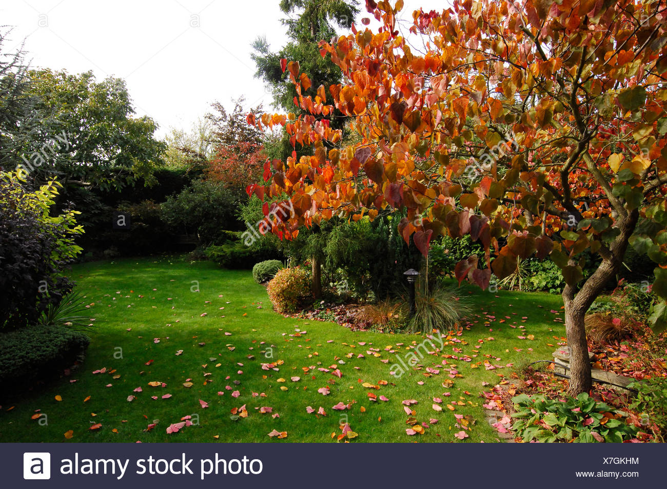 View Of Linden Tree Stock Photos & View Of Linden Tree Stock Images ...