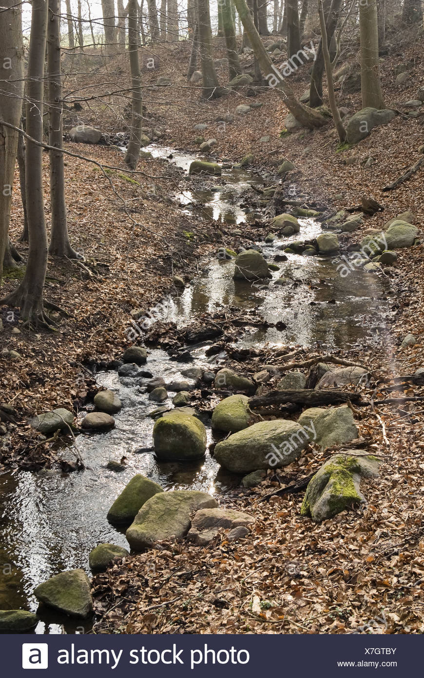 Stream in the autumn forest - Stock Image