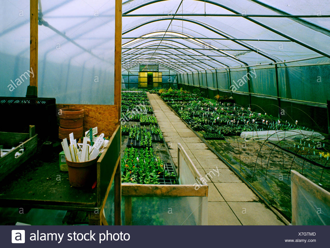 greenhouse of a market garden in North Germany, Germany - Stock Image