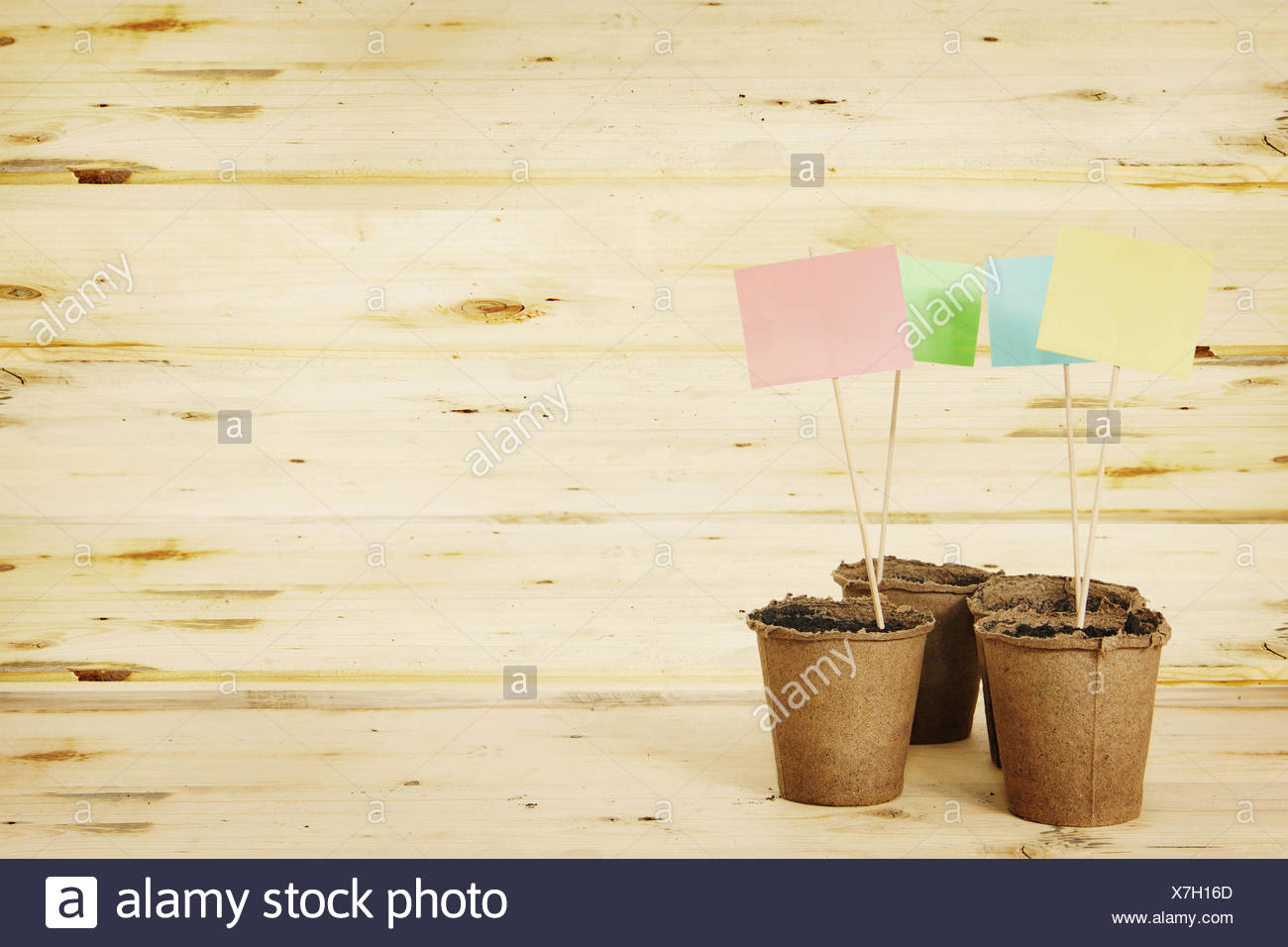 Peat pots with multicolored paper nameplates on the boards - Stock Image