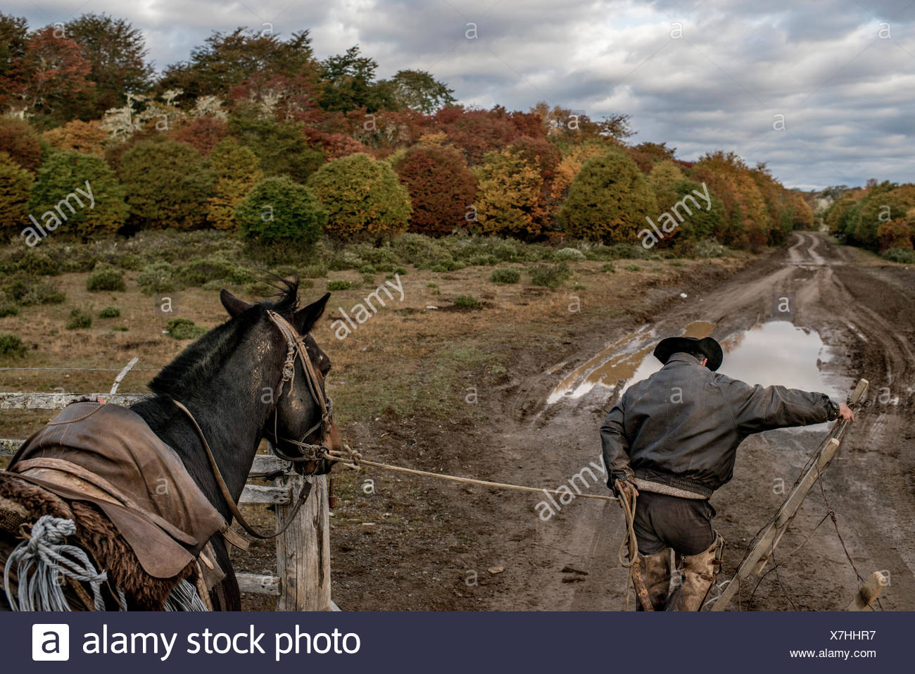 A bagualero or cowboy, who captures feral livestock, en route to inspect traps and set some more. Stock Photo
