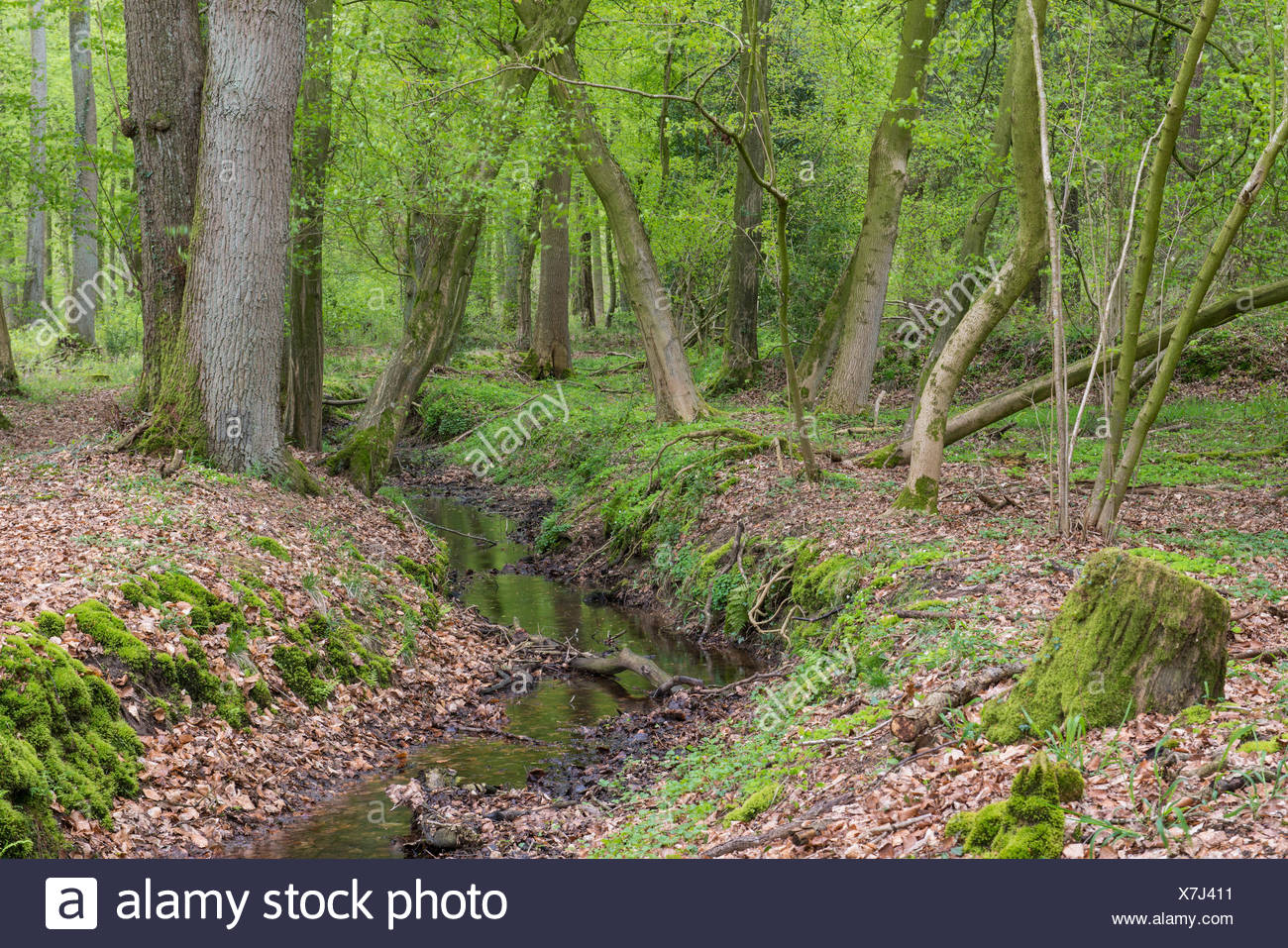 stream at herrenholz, lutten, goldenstedt, vechta district, oldenburger münsterland, lower saxony, germany Stock Photo