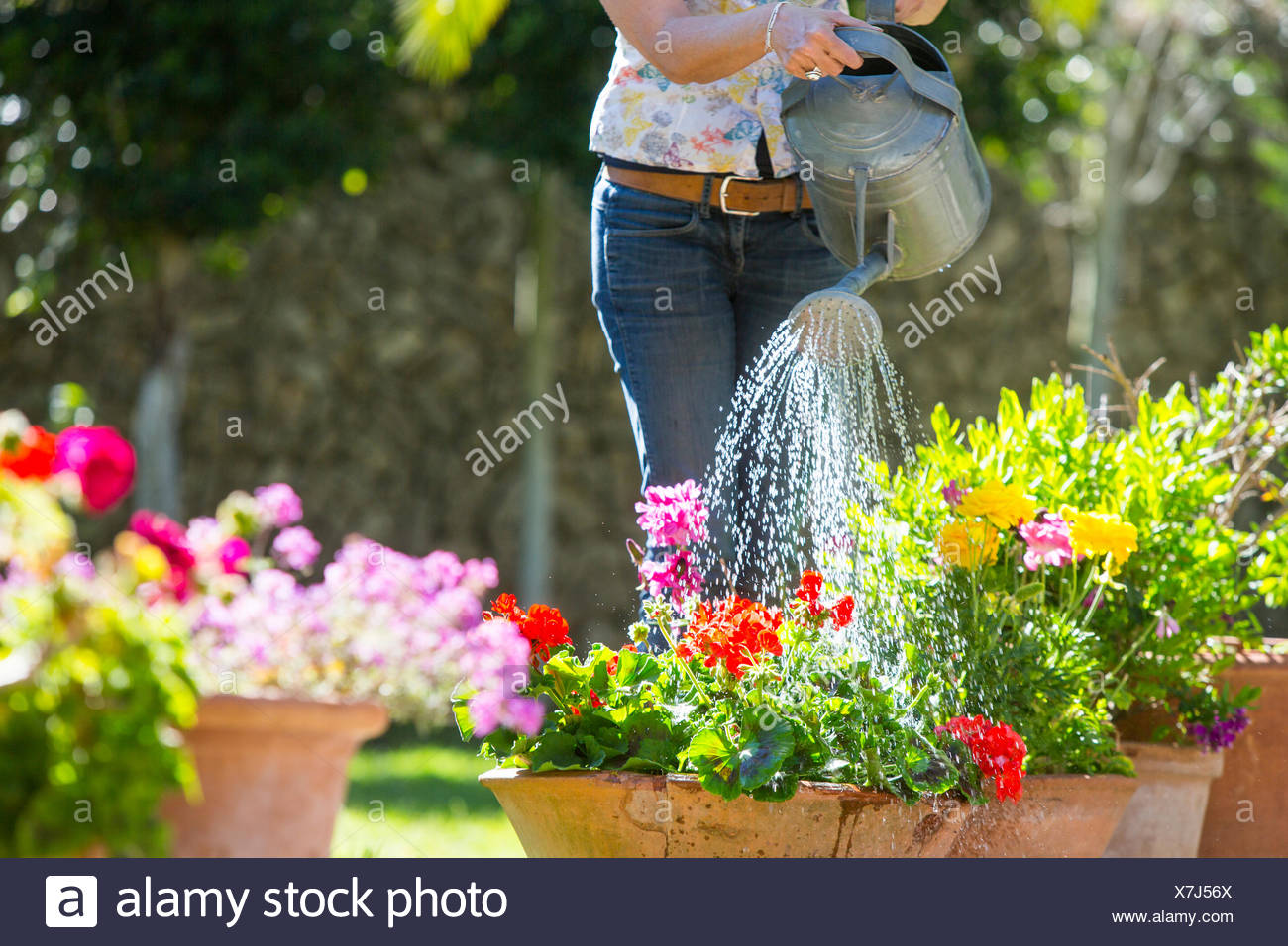 Cropped view of woman watering flower pots in garden - Stock Image