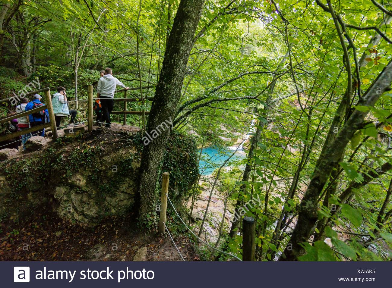 Forest by the sources of Urederra river, Urbasa-Andia natural park, Navarre, Spain - Stock Image