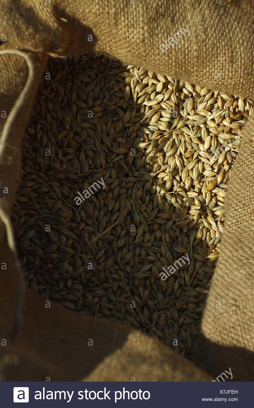 Getreidekörner im Sack Stock Photo