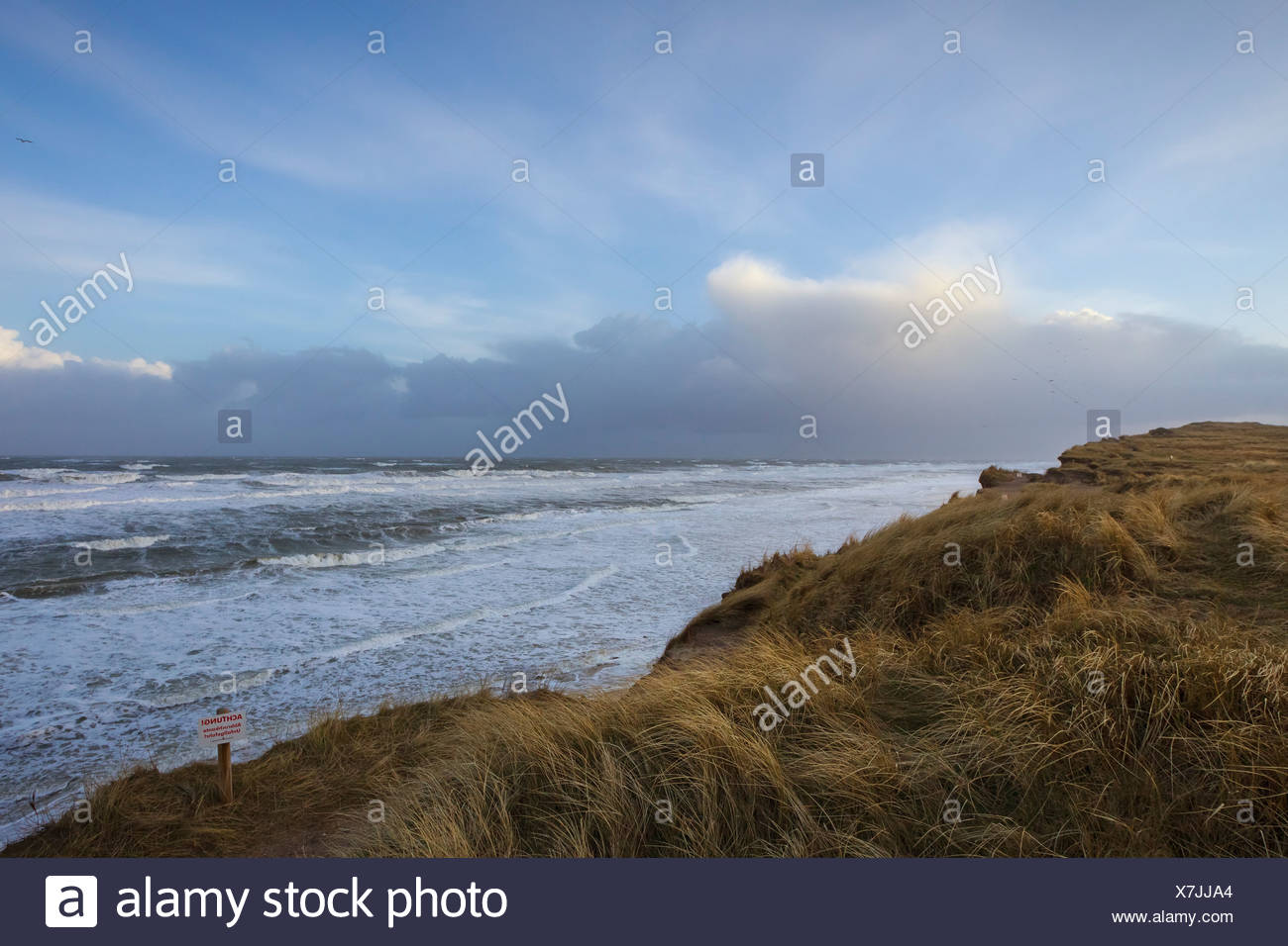 Rotes Kliff, Kampen, Sylt, Schleswig-Holstein, Germany, Europe - Stock Image