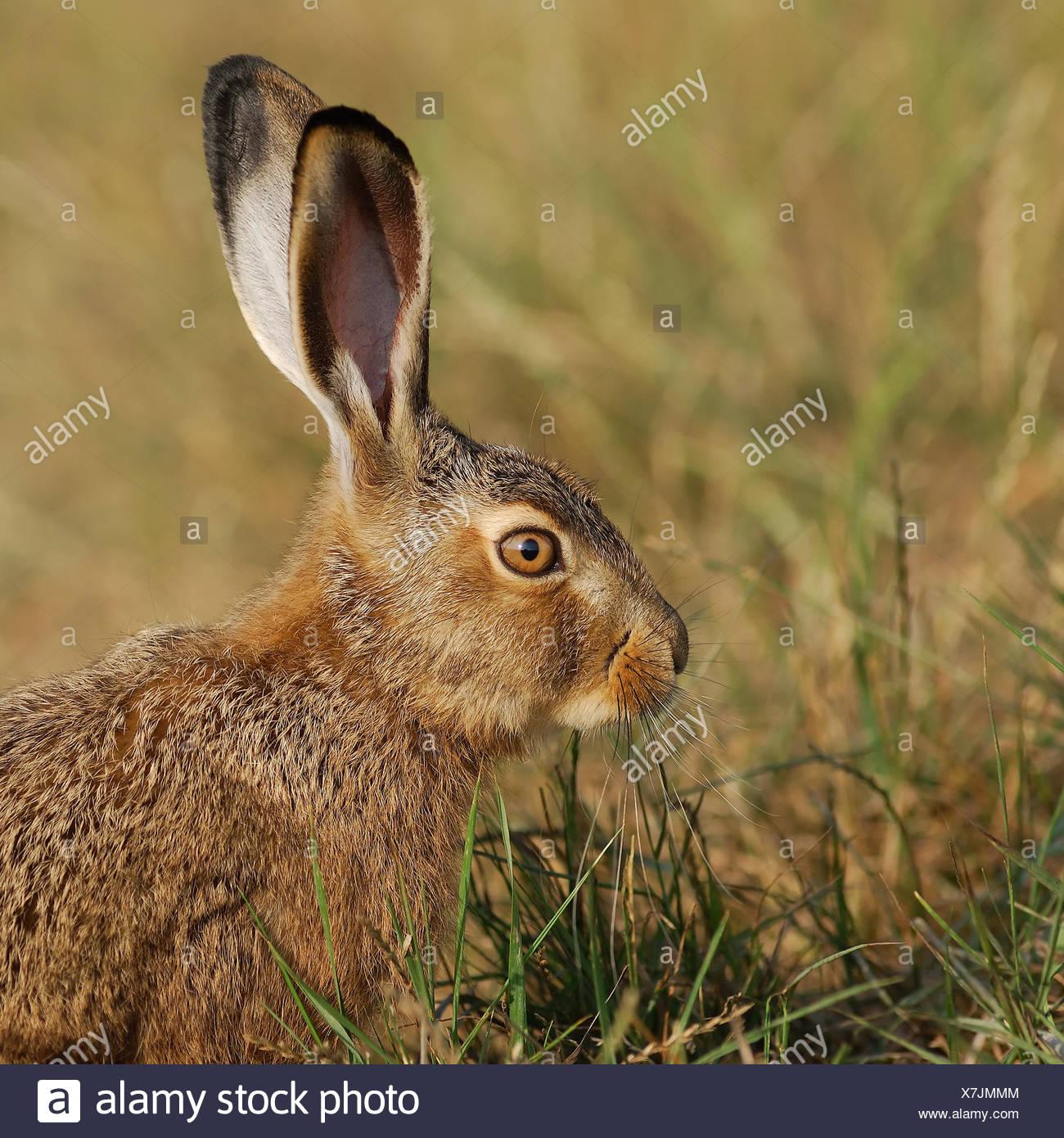 profile animal green Stock Photo
