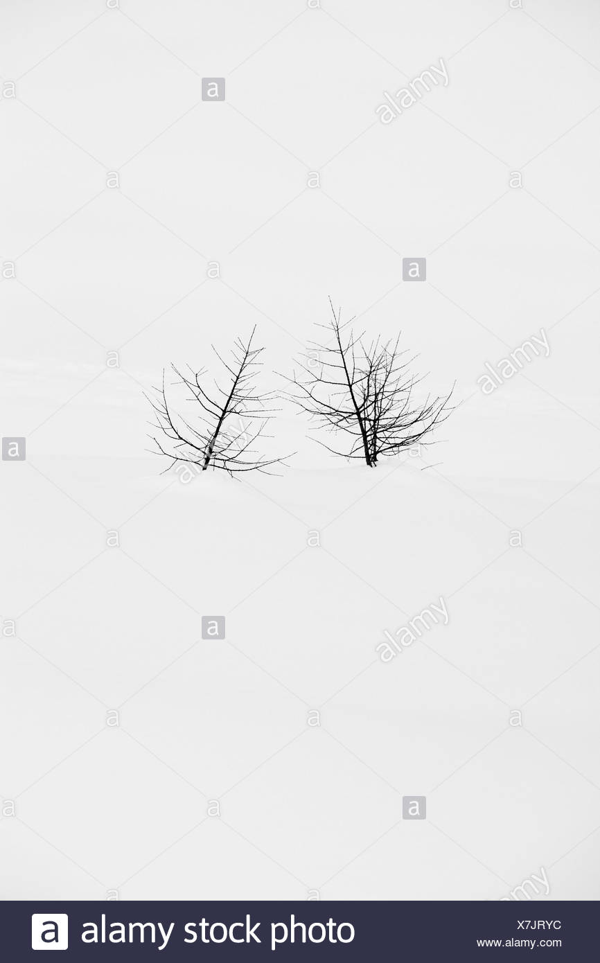 Winter landscape, trees, snowbound, Stock Photo