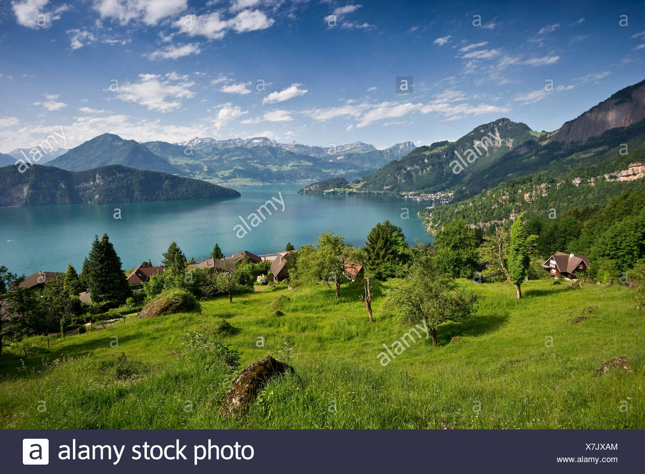 View from Telli towards the south, Weggis, Lake Lucerne, Canton of Lucerne, Switzerland, Europe - Stock Image