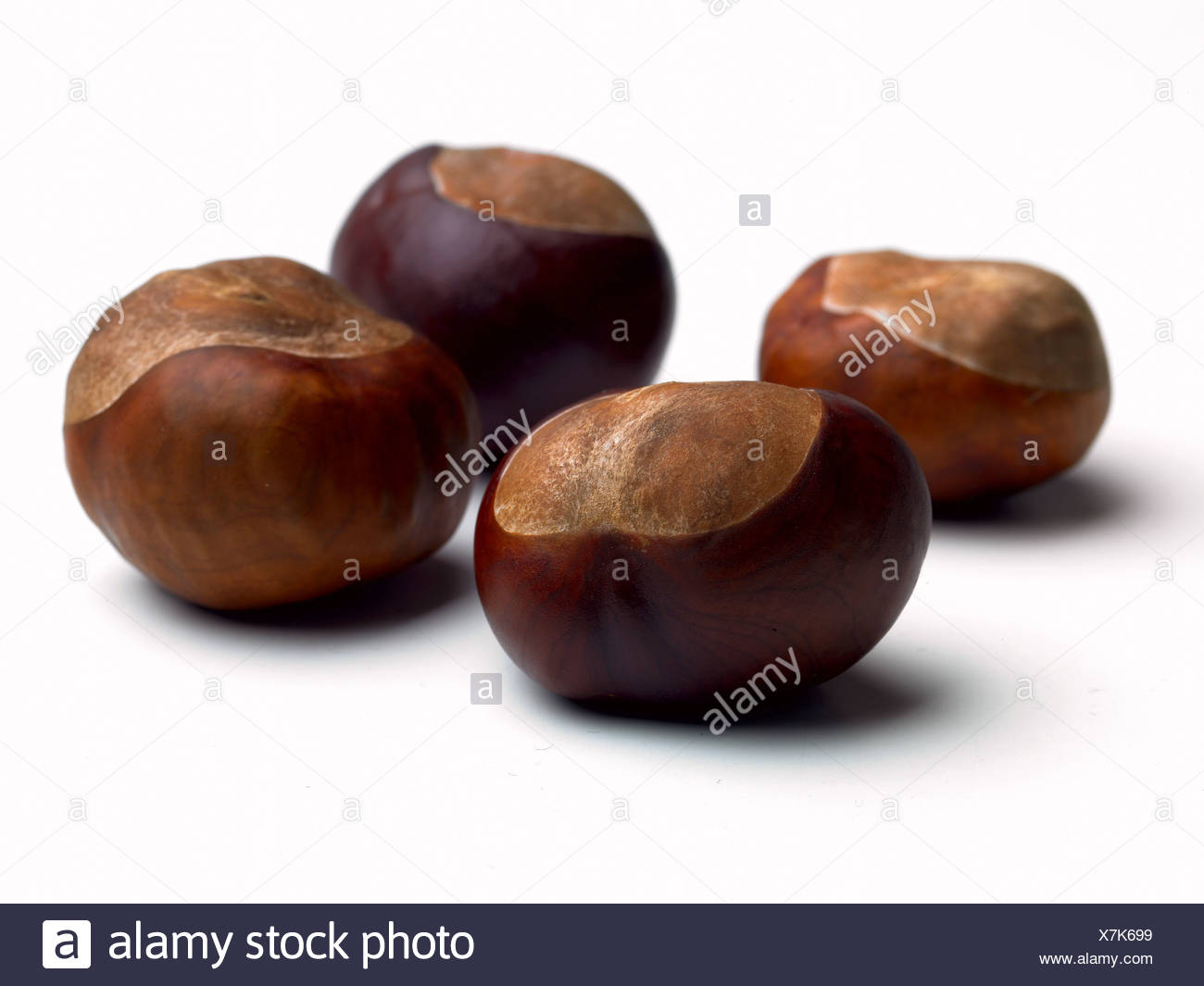 Four conkers, close-up - Stock Image