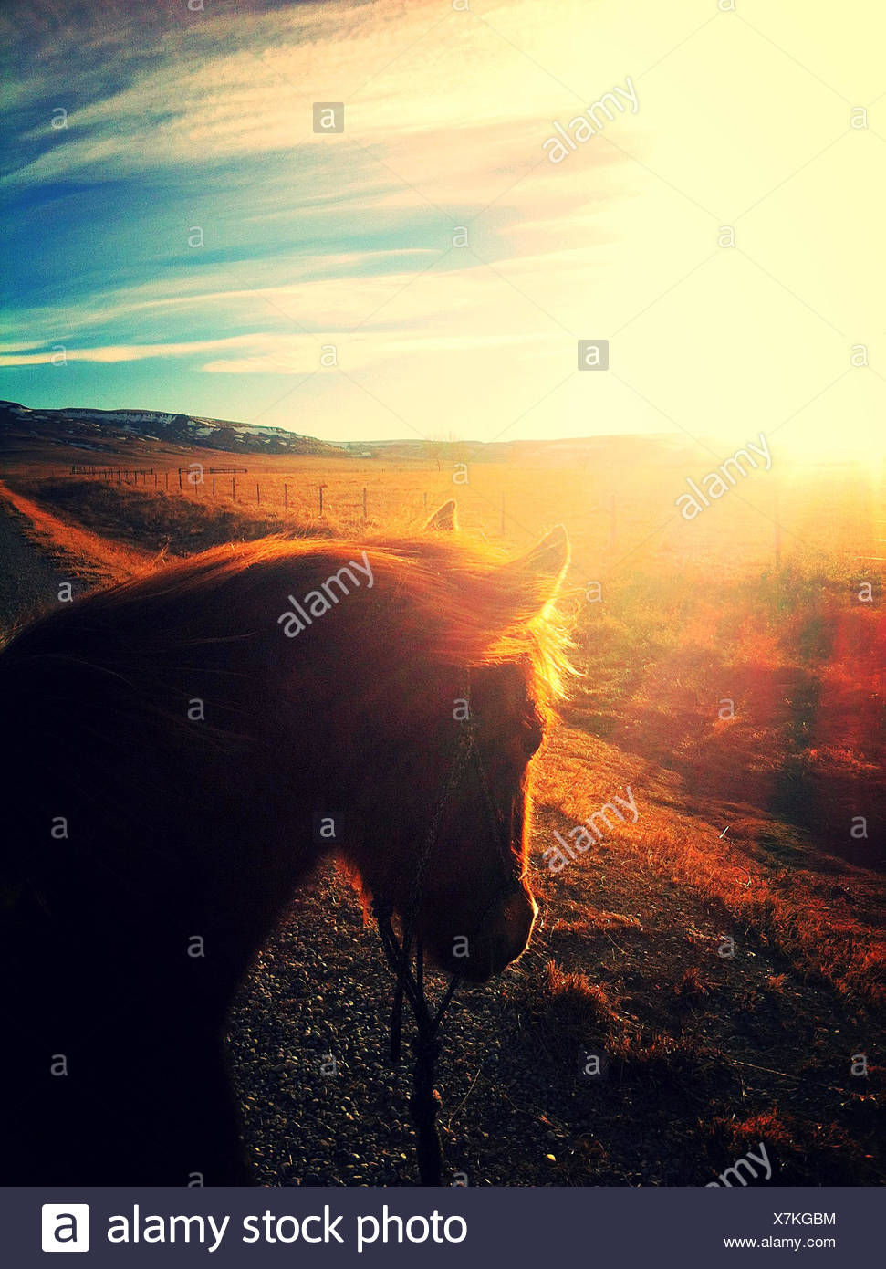 Canada, Alberta, Young horse at sunset - Stock Image