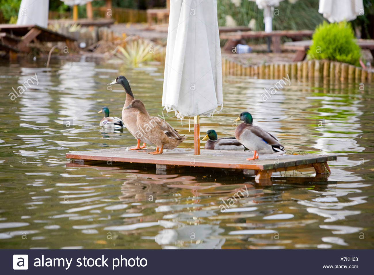 Flooding in the beer garden of The Wateredge Inn at Waterhead on Lake Windermere in Ambleside UK - Stock Image