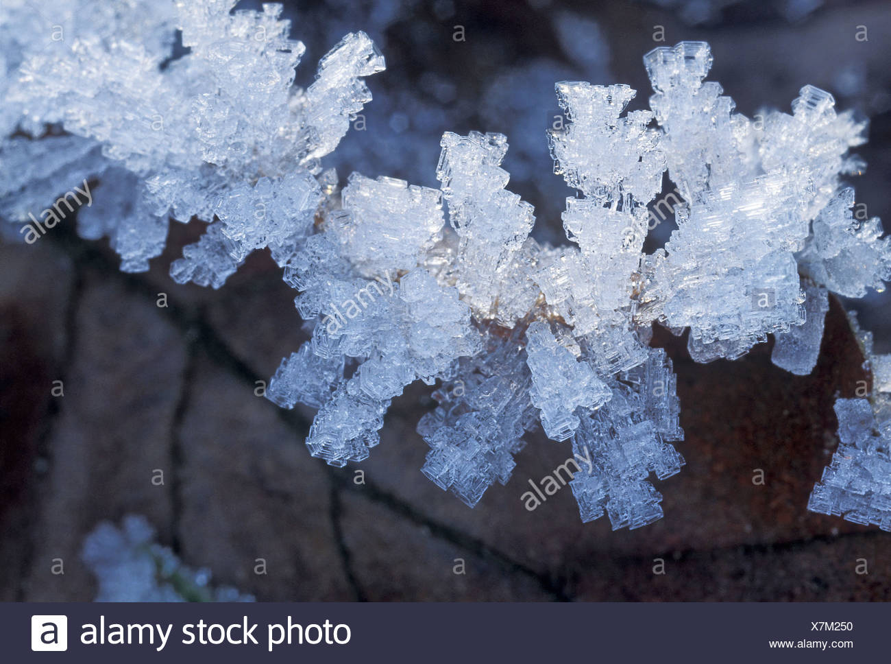 Fine white hoar frost, ice crystals on a leaf, Switzerland - Stock Image