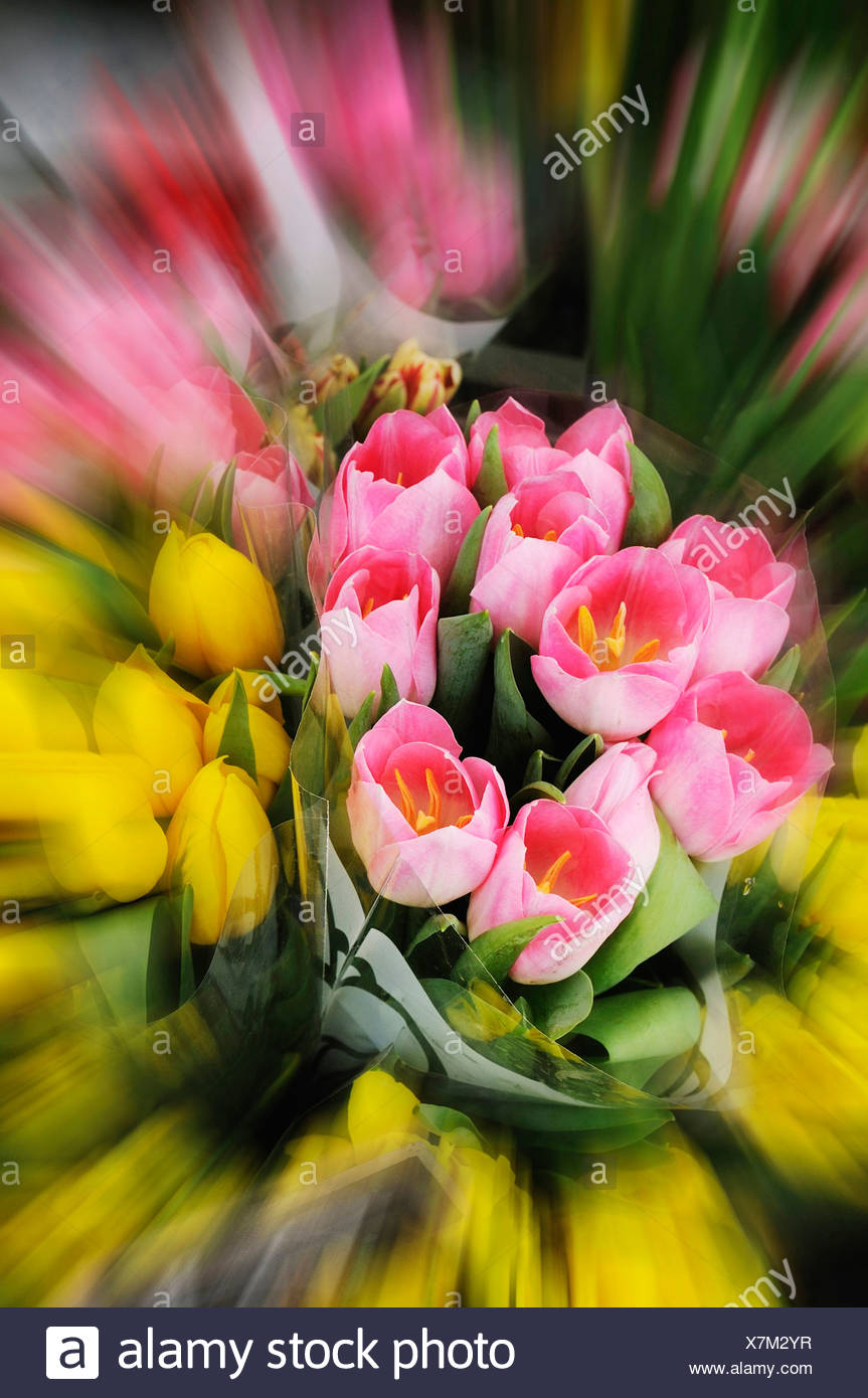 Bunch of tulips (tulipa), close up - Stock Image