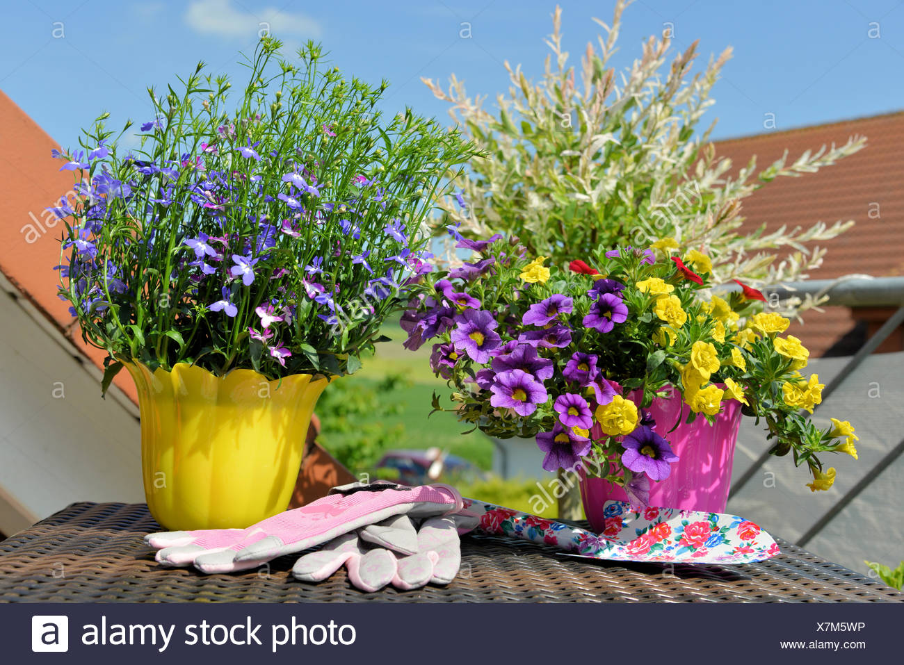 summer flowers in pots on the balcony - Stock Image
