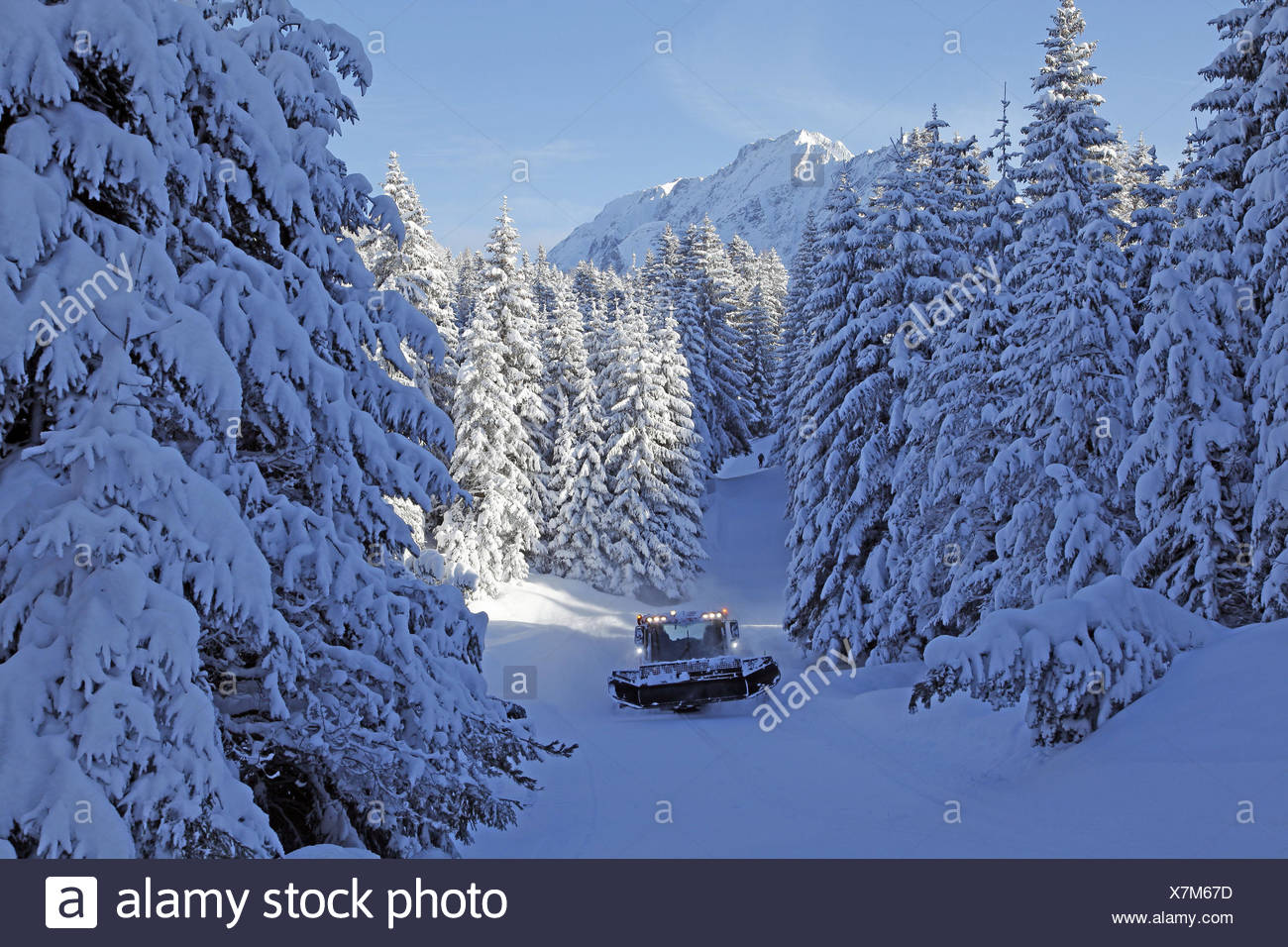 piste basher in the winter wood, - Stock Image