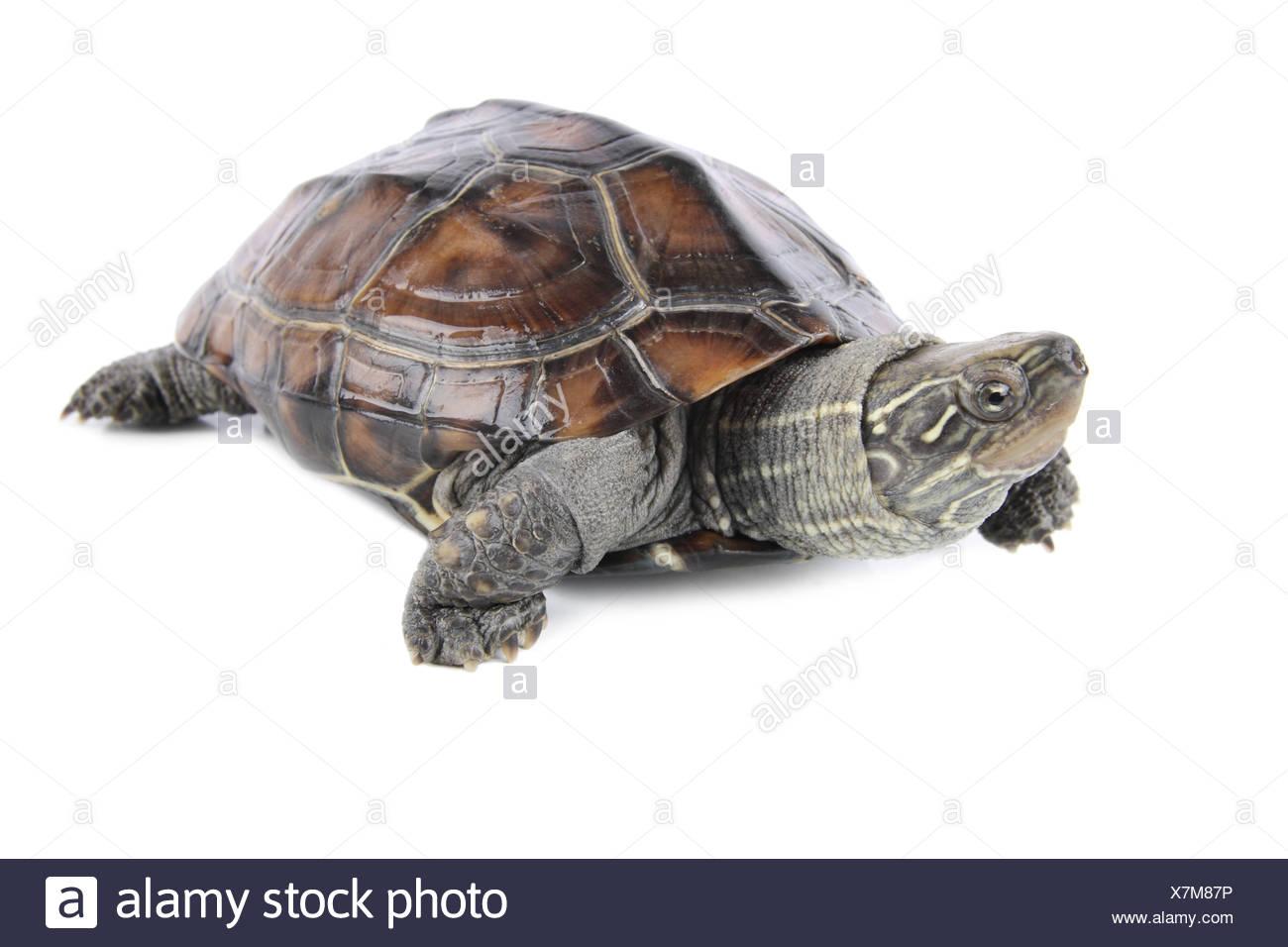tropical tortoise Stock Photo