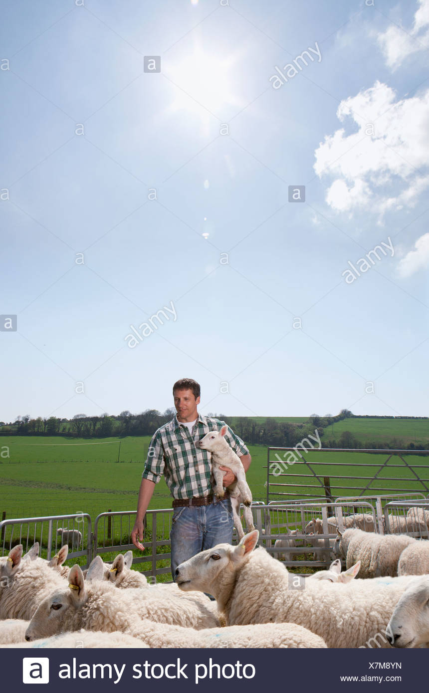Shepherd holding lamb in pasture Stock Photo