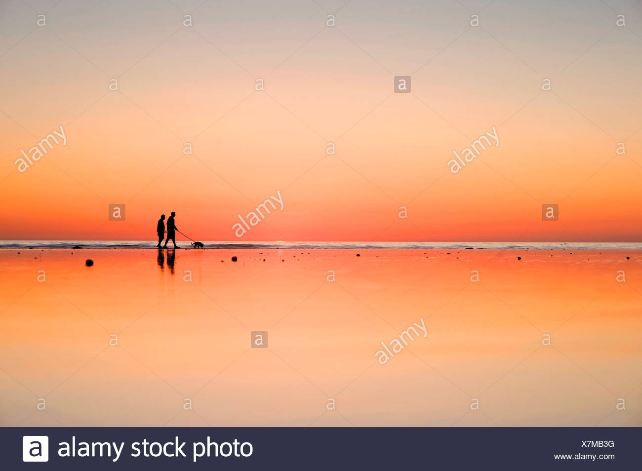 Silhouetted figures walk their dog on wet sand beside the ocean at sunset. - Stock Image