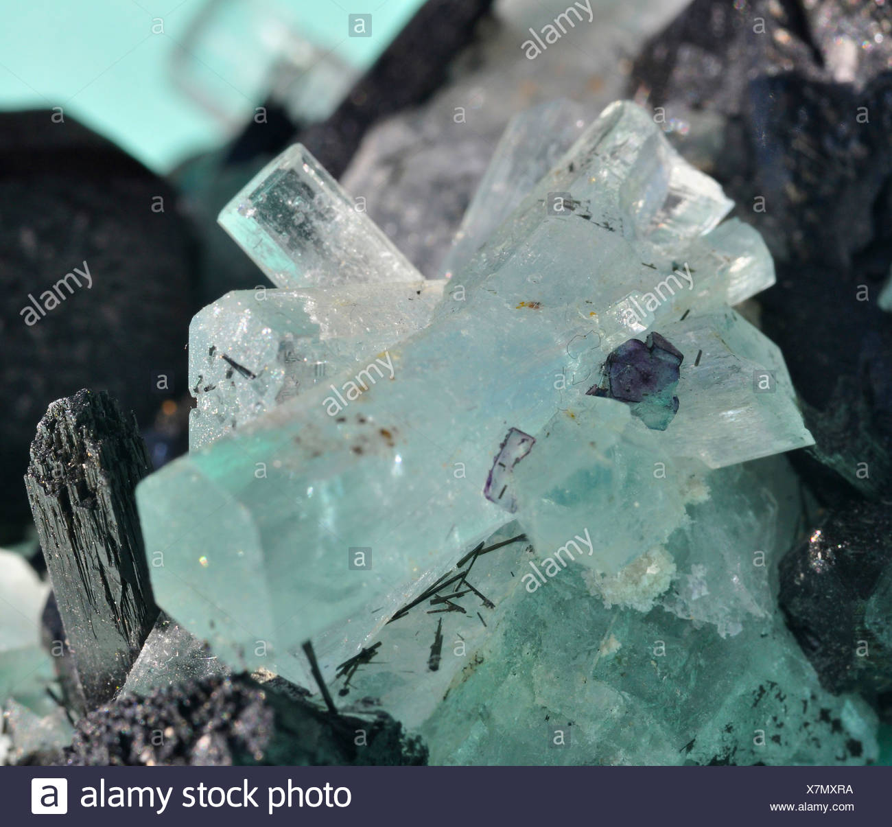black tourmaline crystals with fluorite crystals - Stock Image