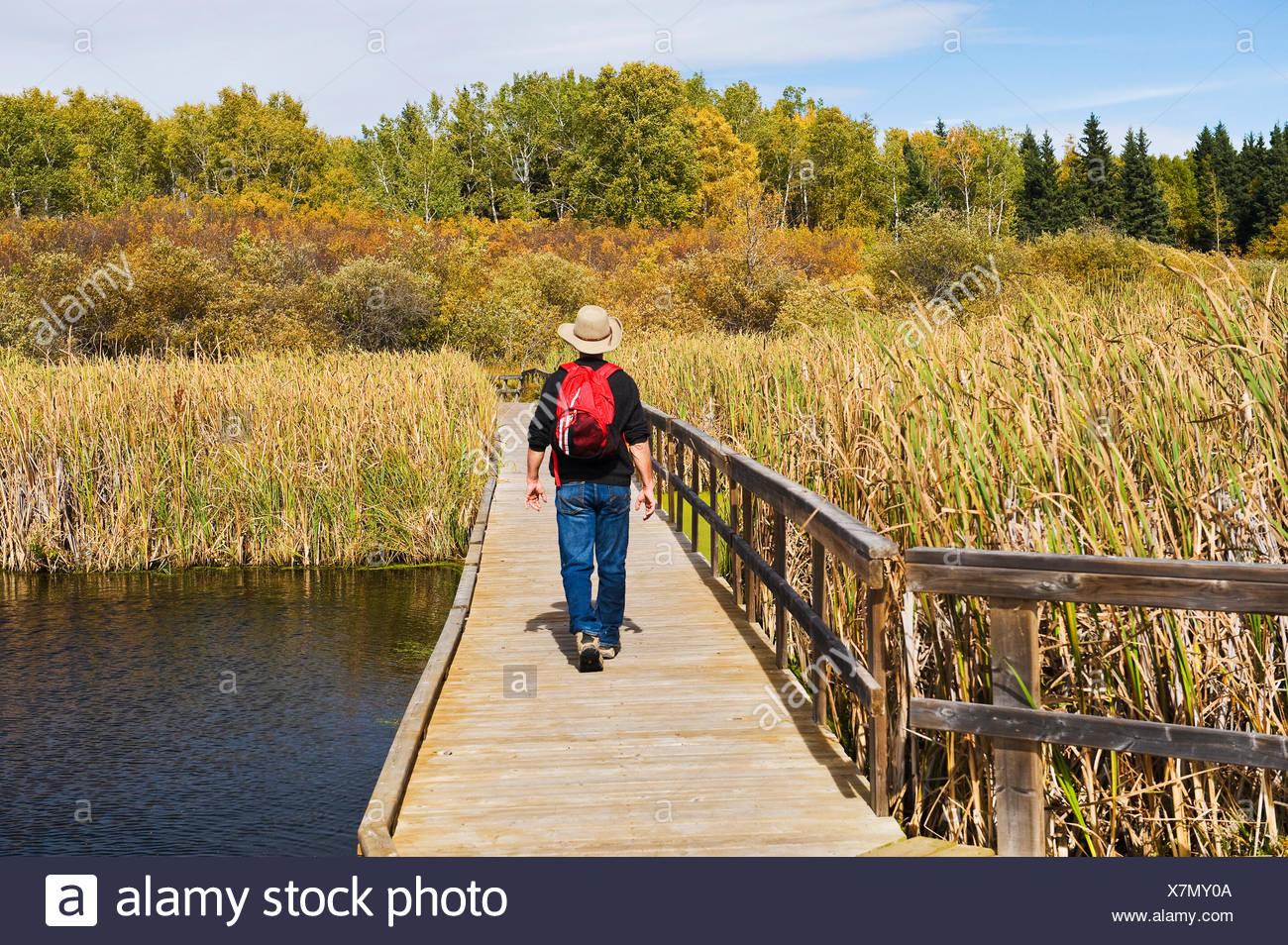 hiker on the Ominik Marsh Boardwalk, Riding Mountain National Park, Manitoba, Canada - Stock Image