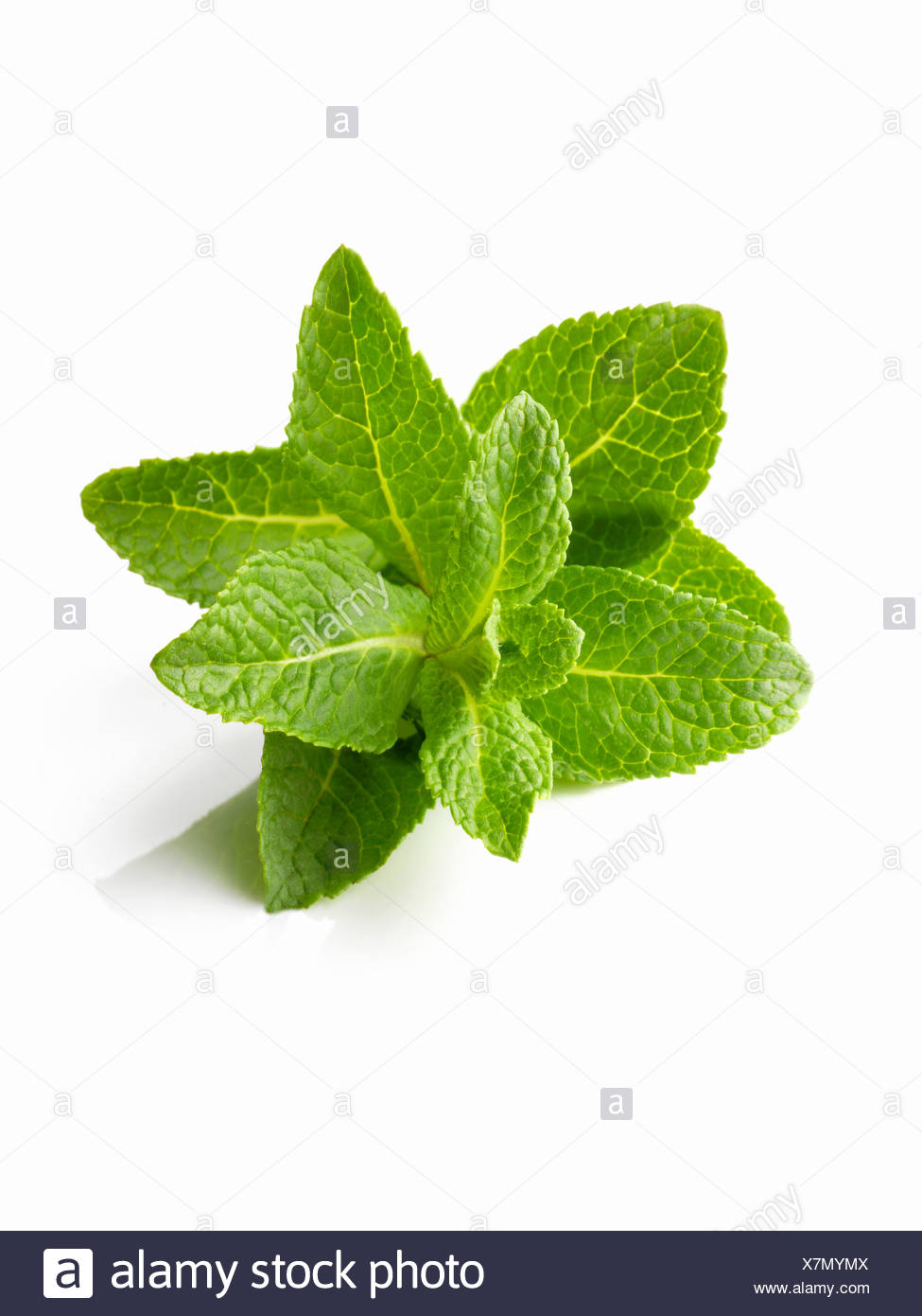 Mint leaves - Stock Image