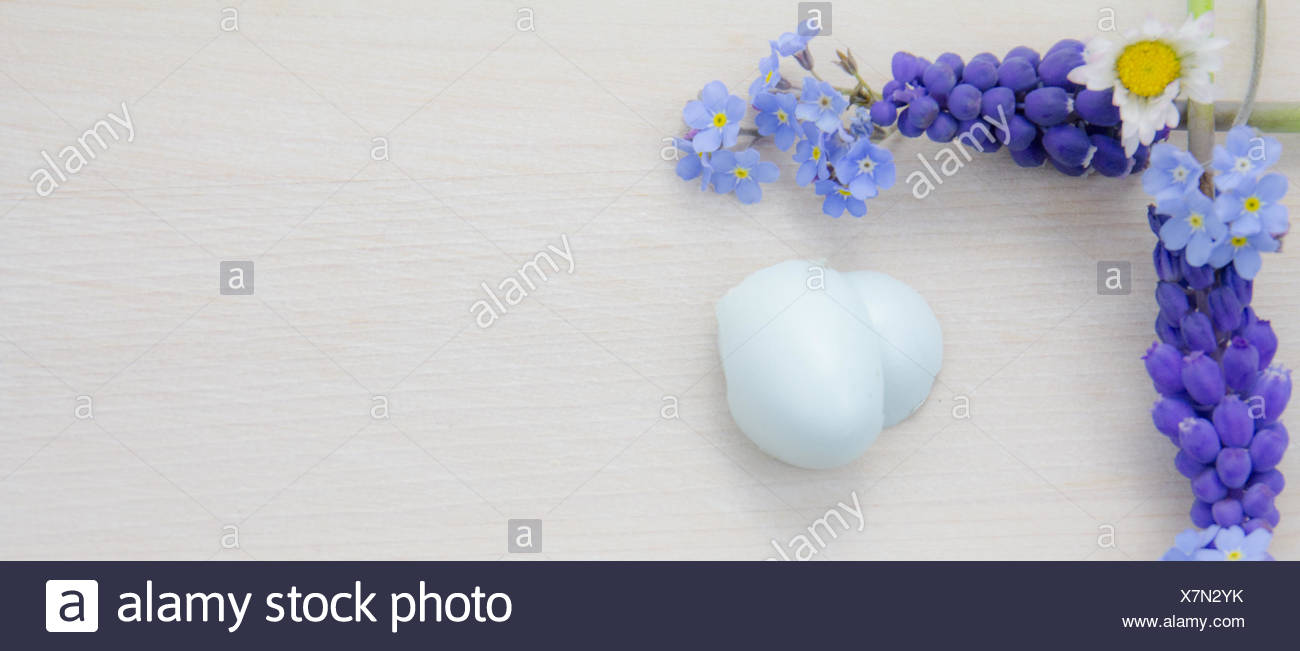 Forget-me-not, Daisys and grapehyacinth - Stock Image