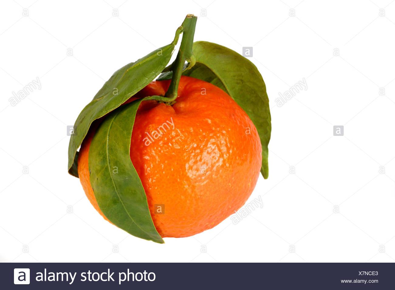 orange leaf optional - Stock Image