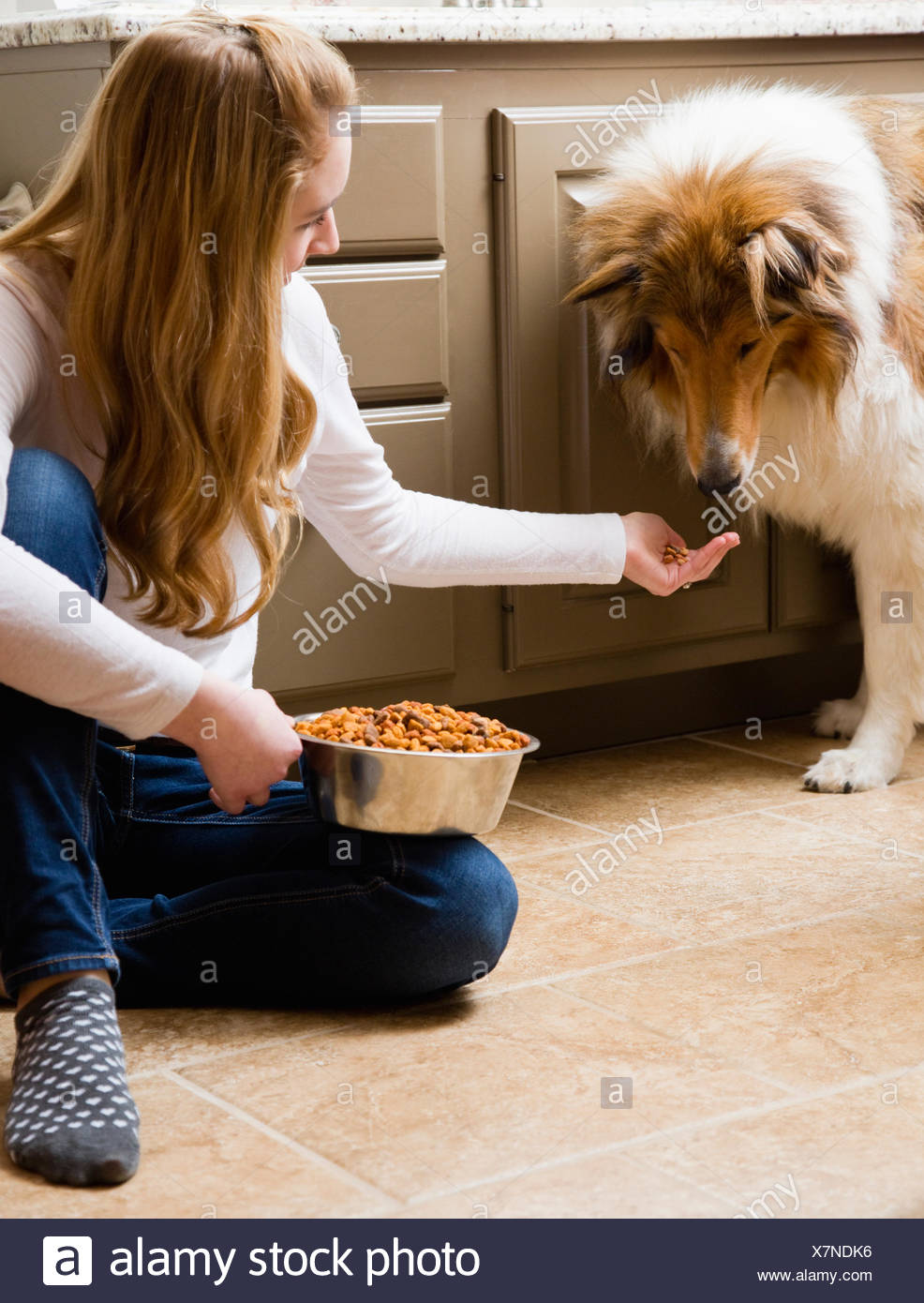 Teenage girl (14-15) feeding collie dog in kitchen - Stock Image