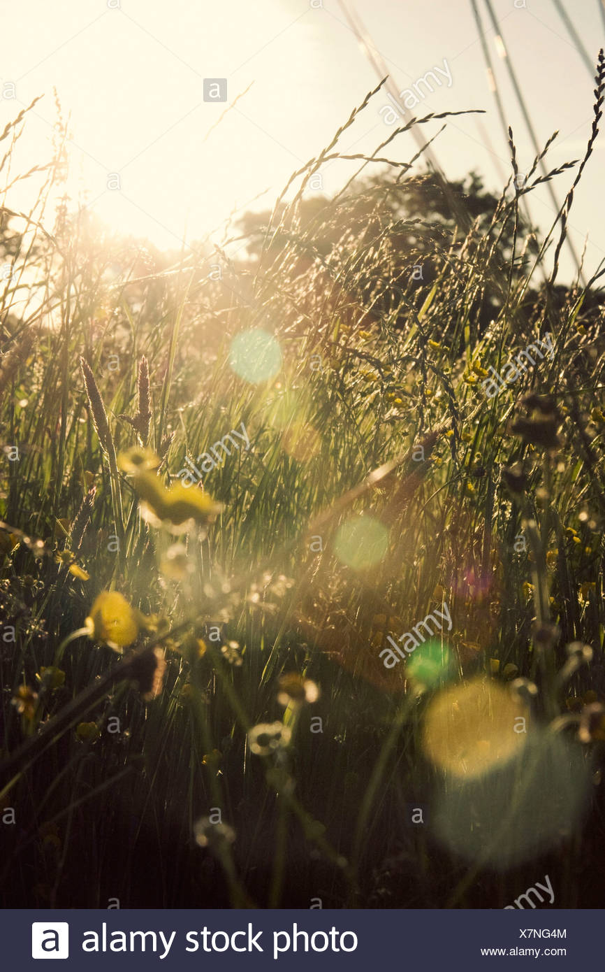 Grass, Mixed plants and colours subject, - Stock Image