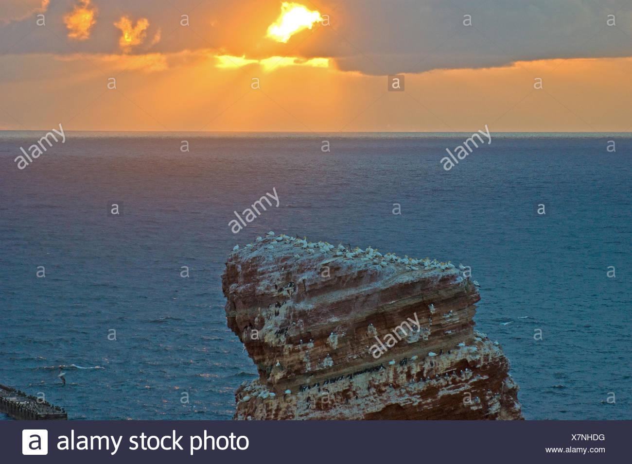 Germany, Schleswig-Holstein, Helgoland, rock spire Lange Anna, bird colony, sunset, - Stock Image