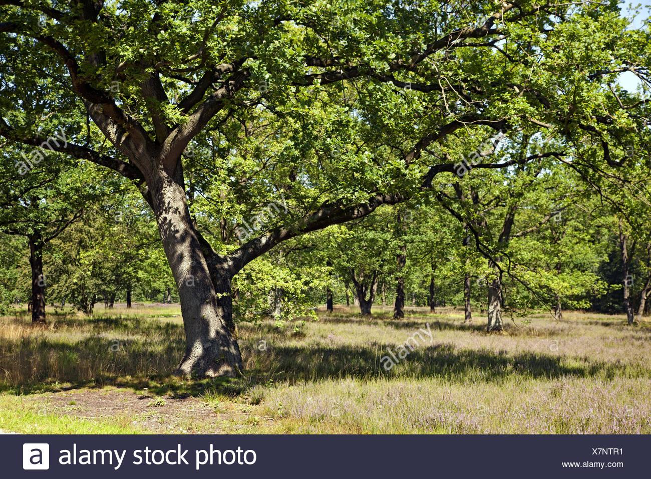 Park, tree, grass, idyll, - Stock Image