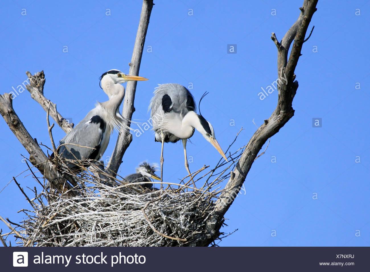 family idyll - Stock Image