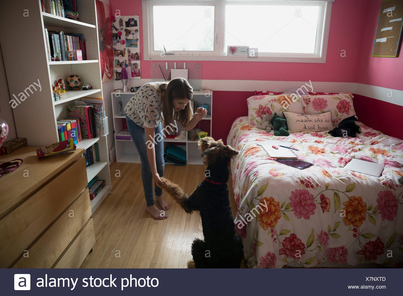 Girl holding treat and shaking dog paw bedroom - Stock Image