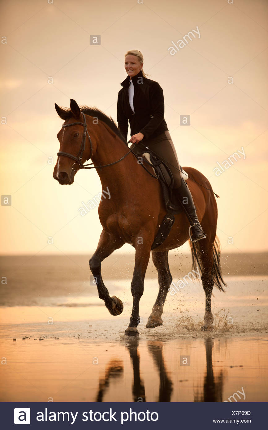 Woman riding on a Hanoverian gelding, wearing an English bridle, at a gallop, in the evening light, on the beach of Borkum - Stock Image
