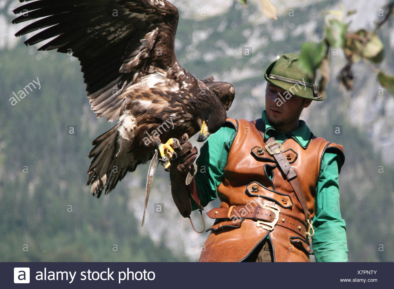 Austria County Of Salzburg Hohenwerfen Castle Birds Of Prey Show Falconer With A Griffon Vulture Stock Photo Alamy