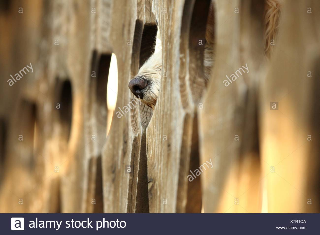 mongrel behind fence Stock Photo