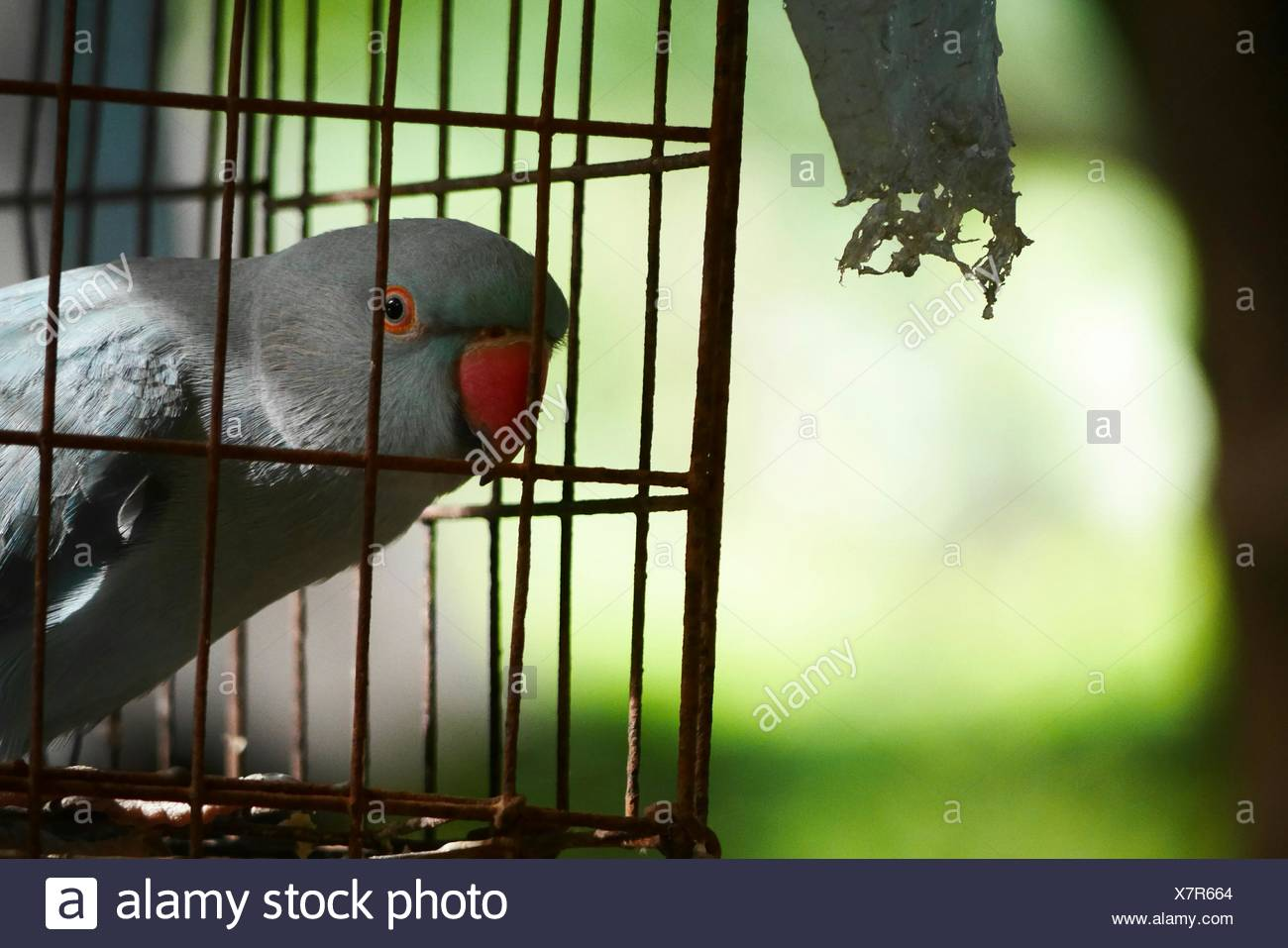 parrot in cage stock photos parrot in cage stock images alamy