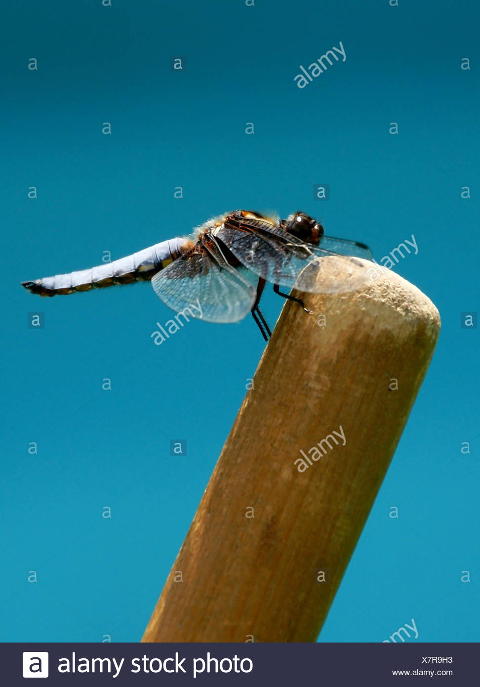 fodder insect spider fly doll to gorge engulf devour page sheet bee fodder - Stock Image