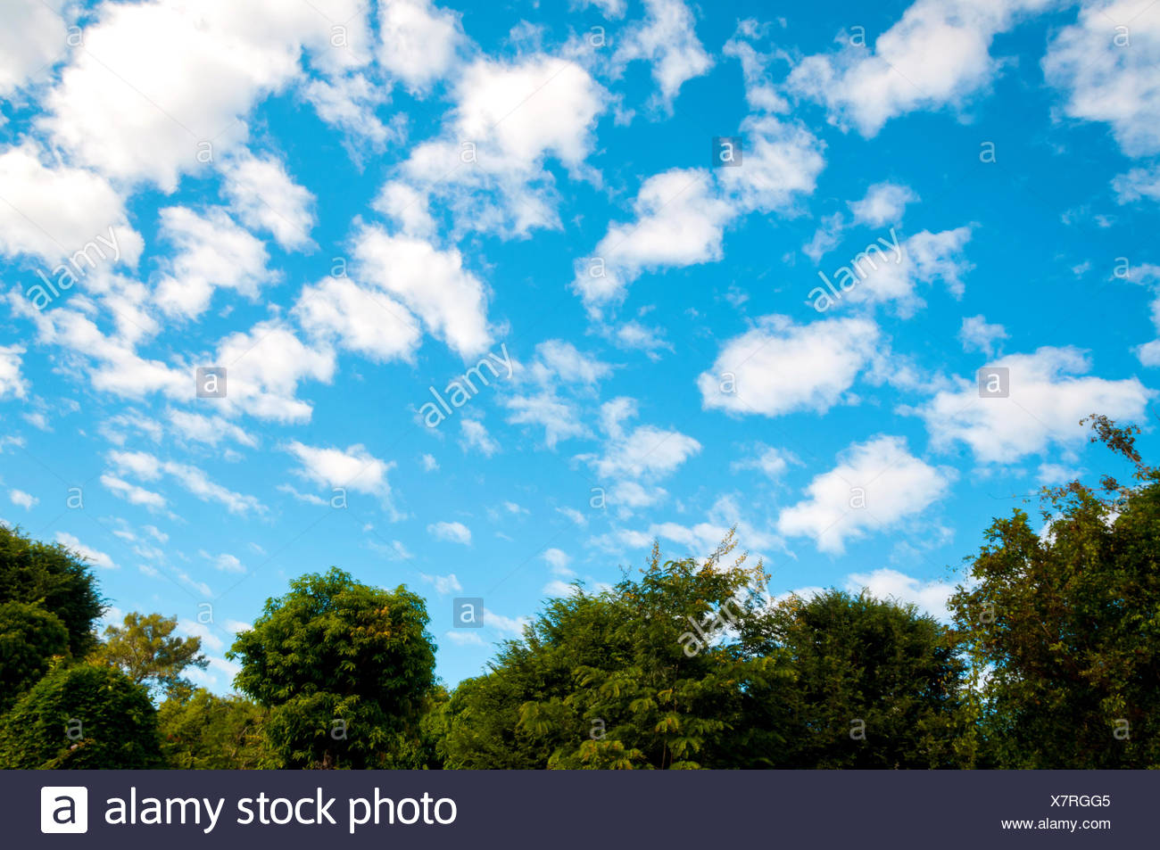 White Clouds and Blue Sky - Stock Image