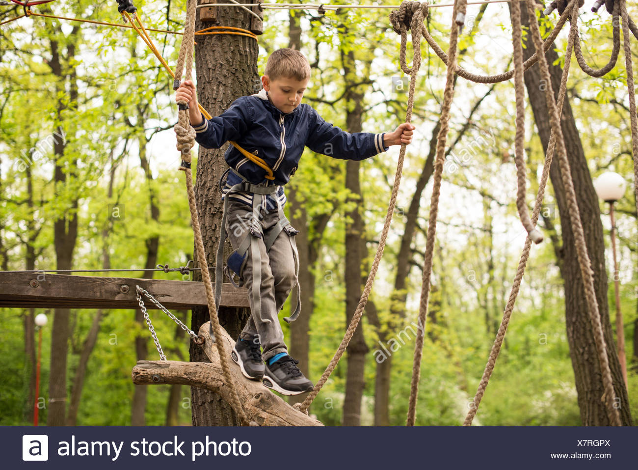 Boy in rope harness on climbing platform in tree in adventure park - Stock Image