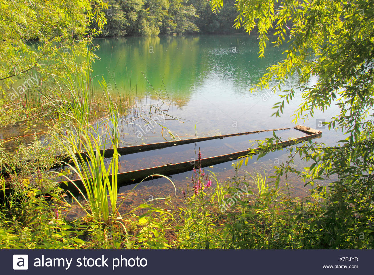 view onto a lake with a overflowed bark, Germany, Baden-Wuerttemberg, Ortenau - Stock Image