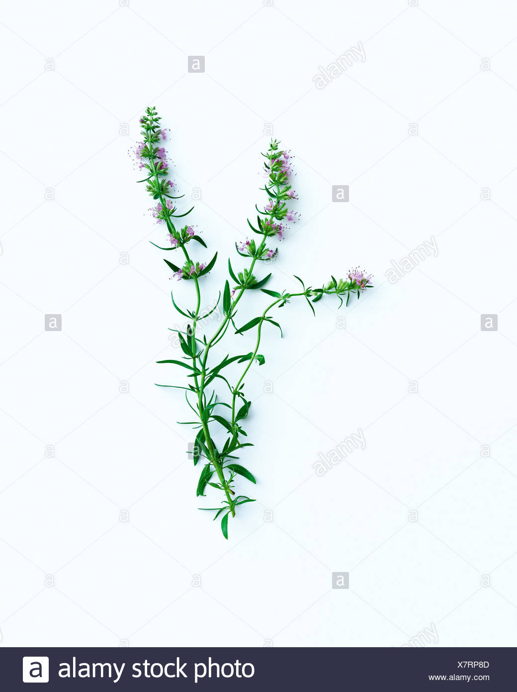 Flower stems and leaves - Stock Image