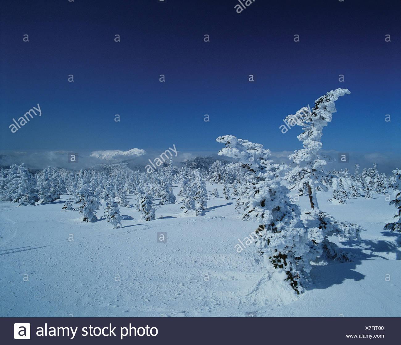 nature,landscape,scenery,scene,winter,snowscape,tr - Stock Image